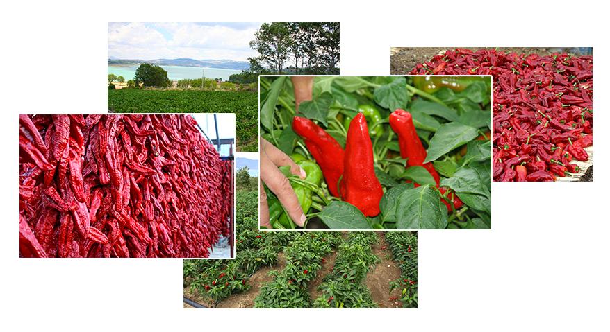 collage-consorzio-tutela-peperone-senise-igp-produttori-agricoltori-aziende-agricole-basilicata
